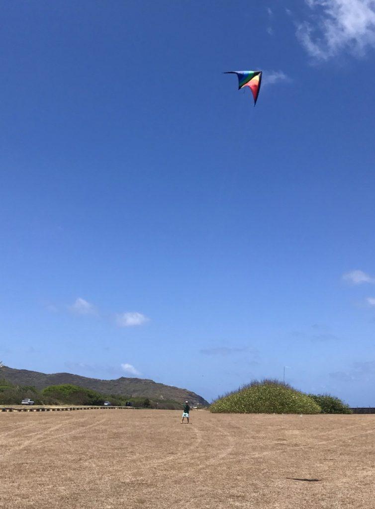 Cerf-volant dans les champs