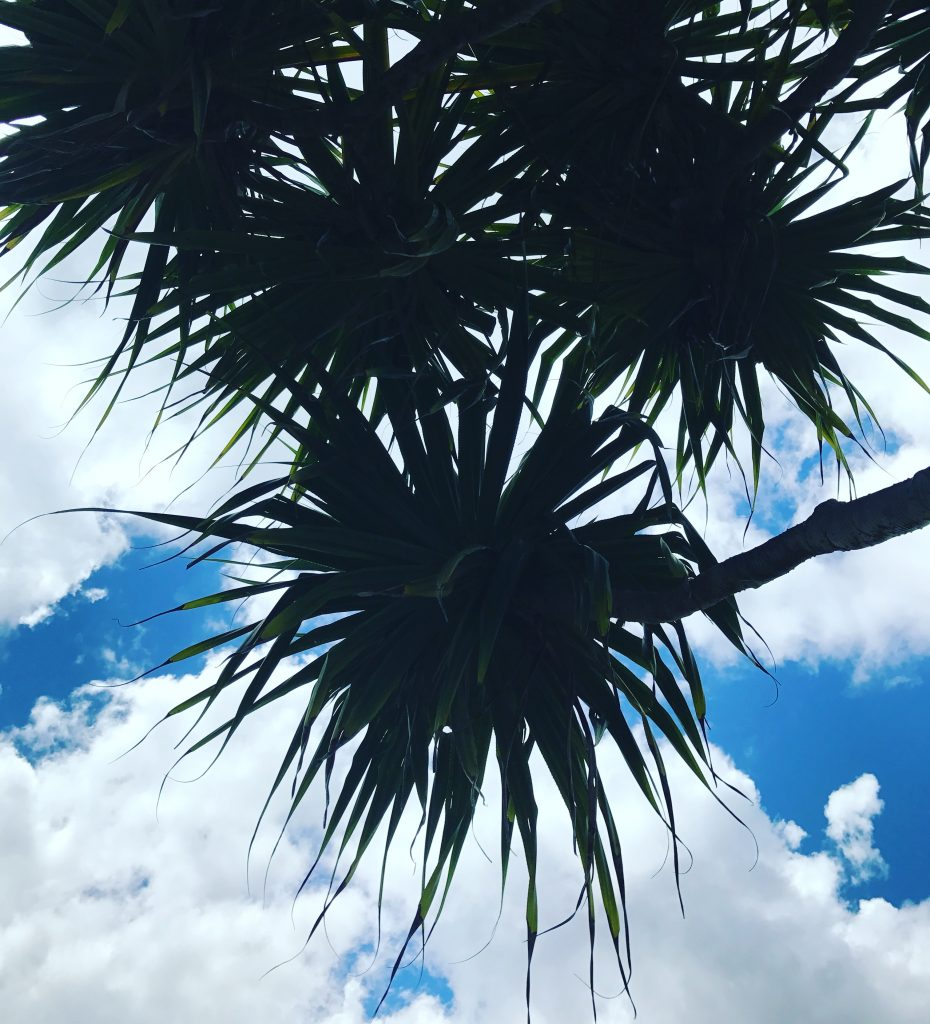 HAWAII OAHU firework tree