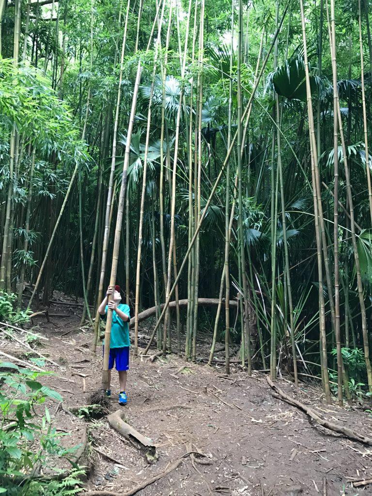 HONOLULU OAHU randonnée hike MANOA FALLS TRAILbambou bamboo