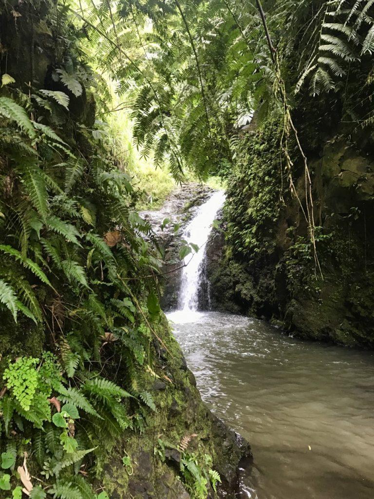 HAWAII MAUNAWILI WATERFALL Chute Maunawili Ferns Fougeres