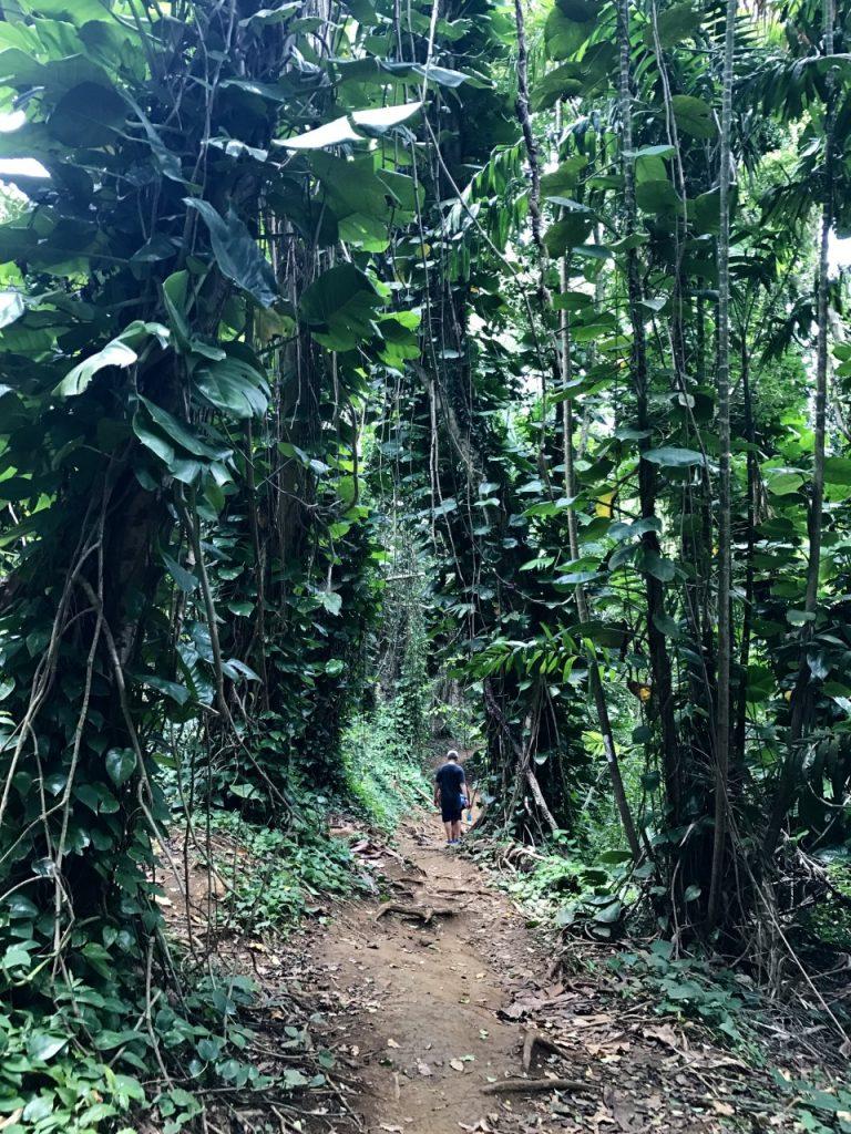 MAUNAWILI WATERFALL Chute Maunawili hiking trail boy