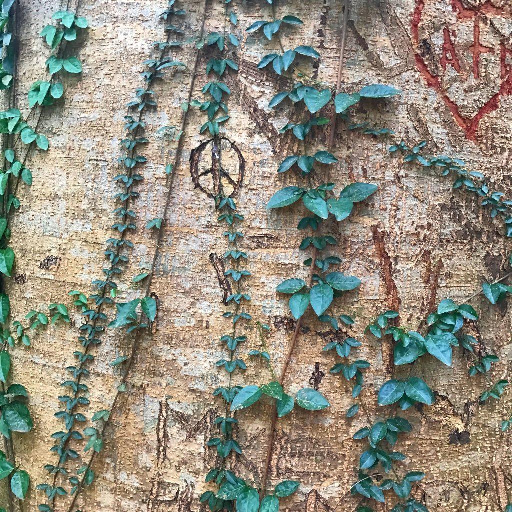hawaii peace and love
