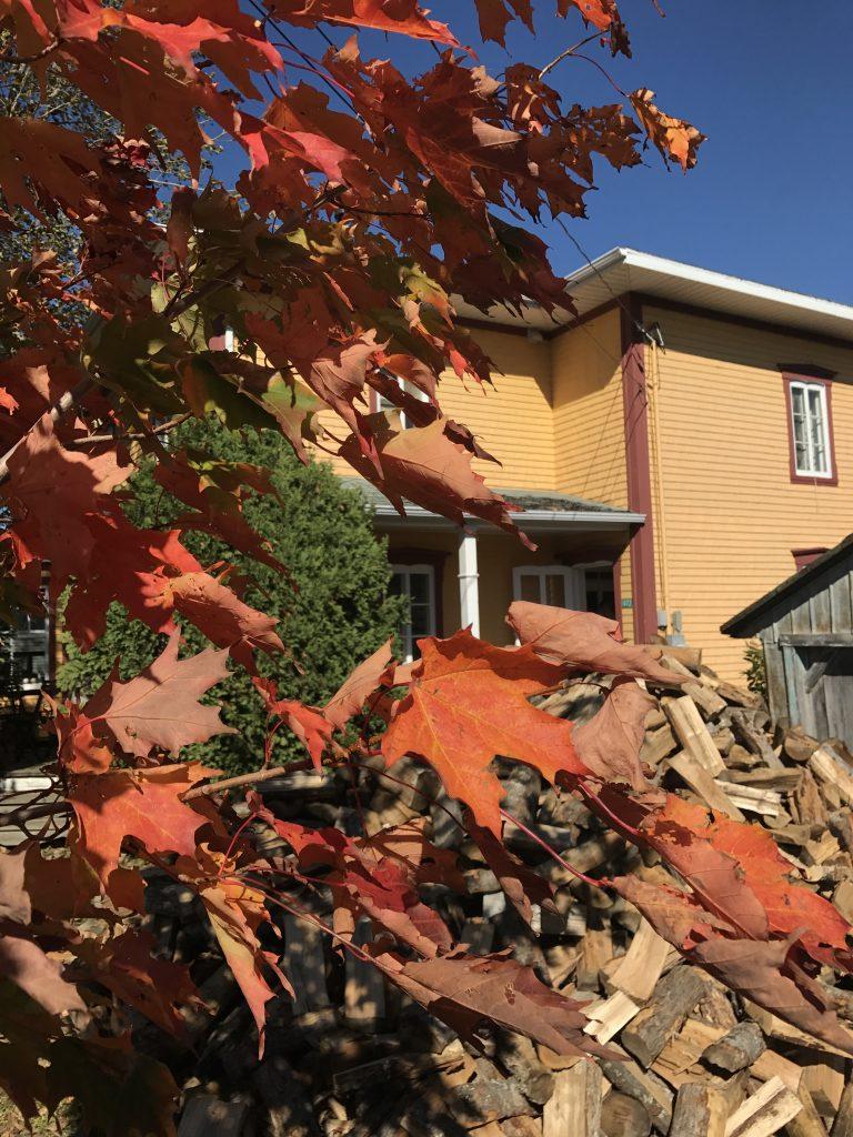 Feuilles d'automne Kamouraska